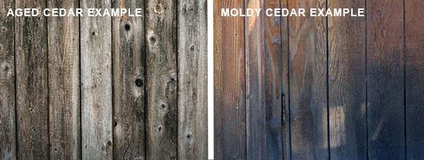 Example of aged cedar and moldy cedar